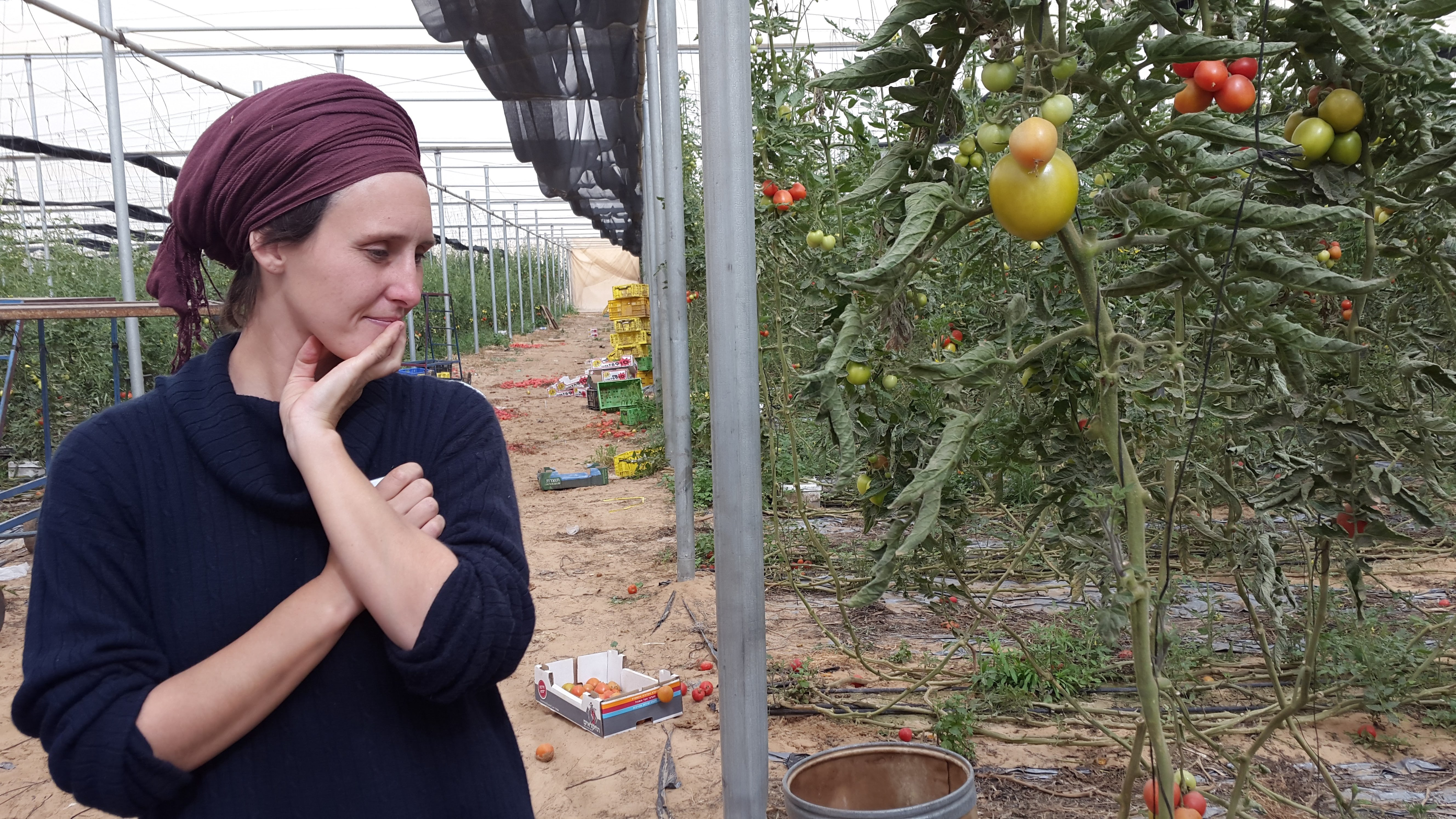 Keren Kayemet, 70 años de la mano con el Estado de Israel