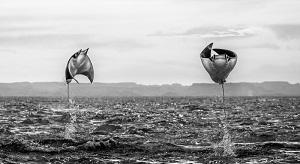 Fotógrafo israelí recibe reconocimiento internacional por una imagen tomada en México
